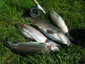 Chauks trout 016