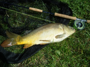 Carp on the fly 2015 005